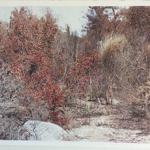 Christos Koutsouras: Land Art (telling trees)